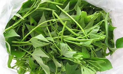 lá khoai lang, khoai lang, lợi ích của rau khoai khoai lang