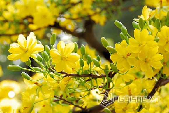 xuân, ca khúc hay nhất mùa xuân, mùa xuân ơi, xuân đã về, chúc xuân, đón xuân, đón tết