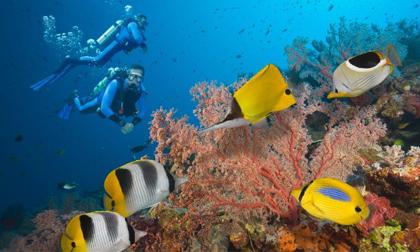 du lịch châu úc,du lịch Australia,Australia,địa điểm trong mơ ở Australia,bãi biển đẹp mê hồn ở Australia,Australia rộng lớn,du lịch nước ngoài