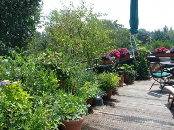 vuon dep 2 ngoisao.vn Cùng nhìn qua 8 mẫu thiết kế vườn tuyệt đẹp cho nhà phố