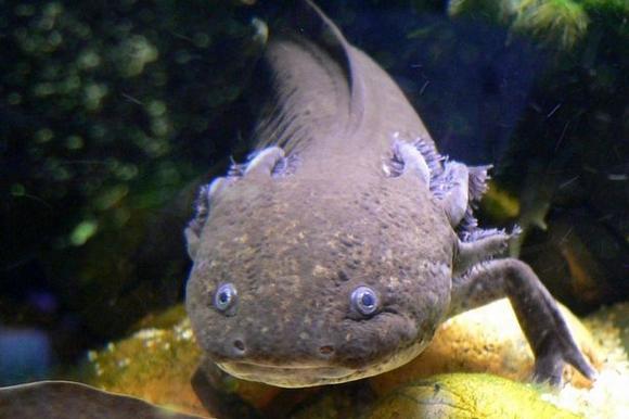 cá có chân, cá khỏng lồ, cá lạ, chuyện lạ, kỳ lạ, tin ngôi sao