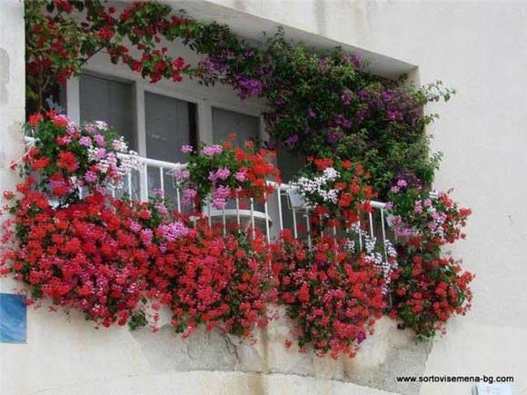 Trang trí 'khu vườn ban công' tuyệt đẹp cho ngôi nhà hiện đại 11