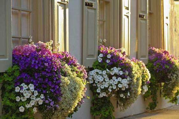 Trang trí 'khu vườn ban công' tuyệt đẹp cho ngôi nhà hiện đại 7