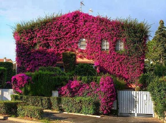 Trang trí 'khu vườn ban công' tuyệt đẹp cho ngôi nhà hiện đại 2