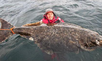 Cá rô phi , Cá rô phi bị đông cứng vẫn có thể bơi, Cá rô phi ướp lạnh vẫn sống