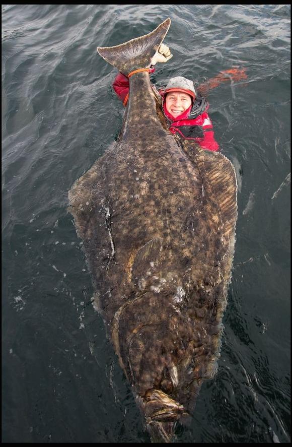 thủy quái, thủy quái khổng lồ, cá bơn, cá khổng lồ, kỳ quặc, kỳ lạ, tin ngôi sao