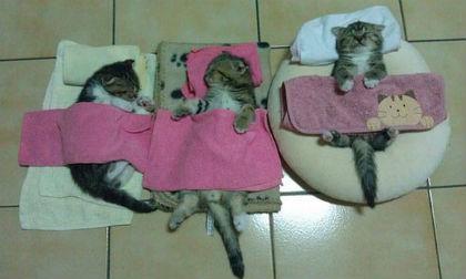 Cười nghiêng ngả với loạt ảnh hài hước về động vật khi ngủ