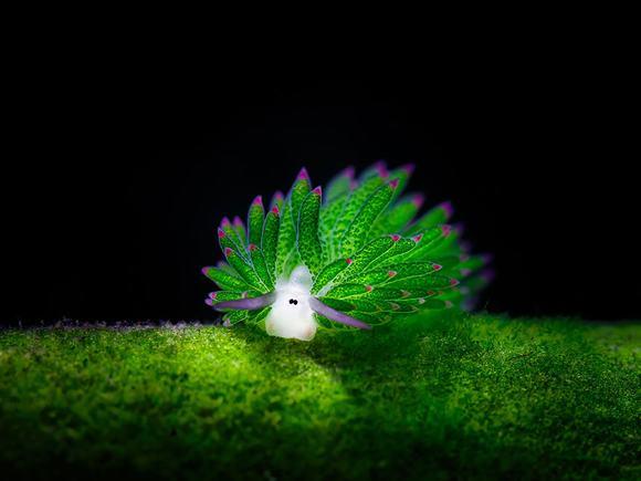 sinh vật phát sáng, sinh vật phát sáng dưới biển, sinh vật biển, sinh vật biển đáng yêu, tin ngoi sao