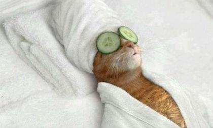 'Chết cười' với những hình ảnh hài hước của loài mèo (P3)