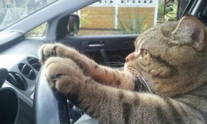 'Chết cười' với những hình ảnh hài hước của loài mèo (P4)