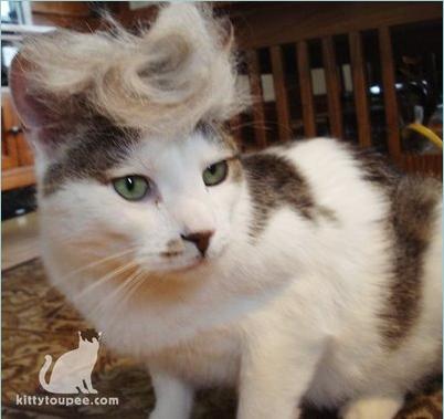 những hình ảnh hài hước của loài mèo p5 20