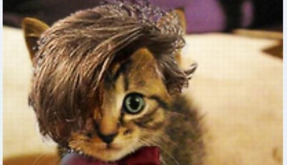 những hình ảnh hài hước của loài mèo p5 10