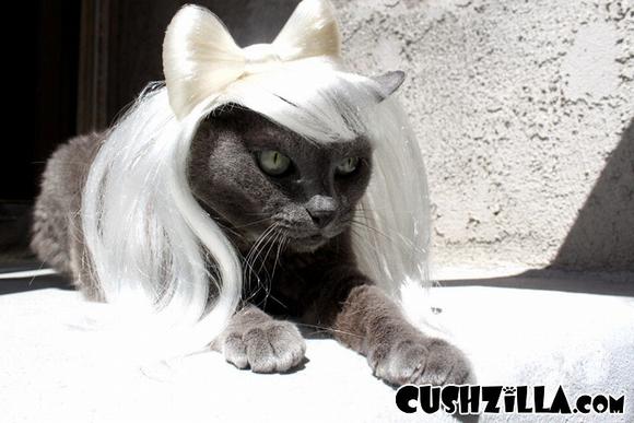 những hình ảnh hài hước của loài mèo p5 9