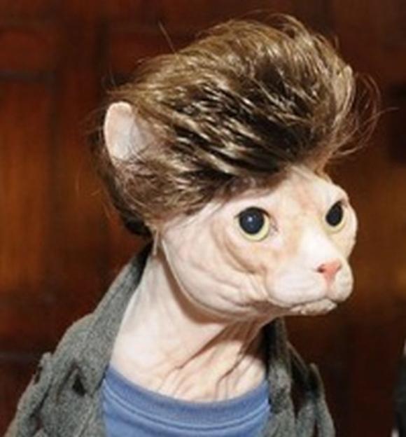 những hình ảnh hài hước của loài mèo p5 8