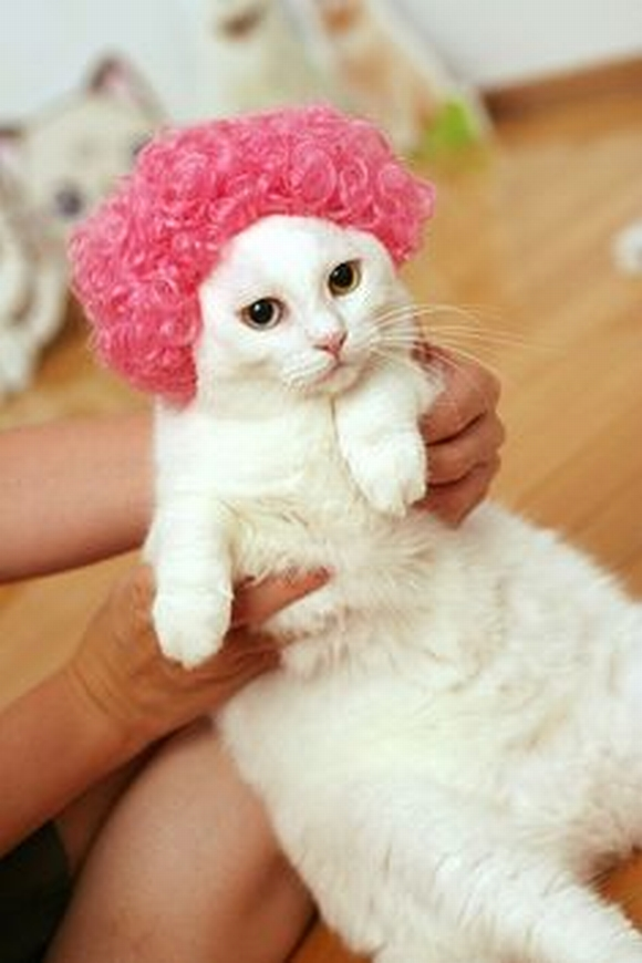 những hình ảnh hài hước của loài mèo p5 7