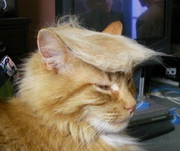 những hình ảnh hài hước của loài mèo p5 6