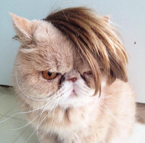 những hình ảnh hài hước của loài mèo p5 4