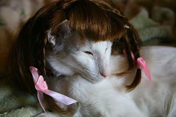 những hình ảnh hài hước của loài mèo p5 3