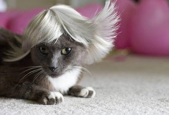 những hình ảnh hài hước của loài mèo p5 2