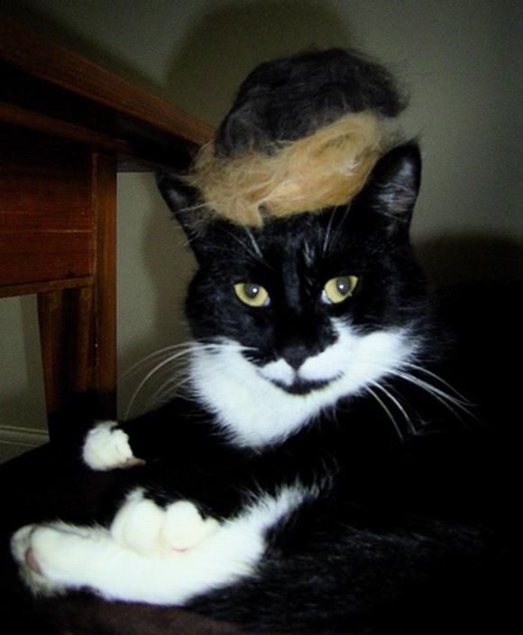 những hình ảnh hài hước của loài mèo p5 19