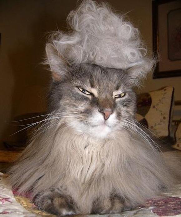 những hình ảnh hài hước của loài mèo p5 1