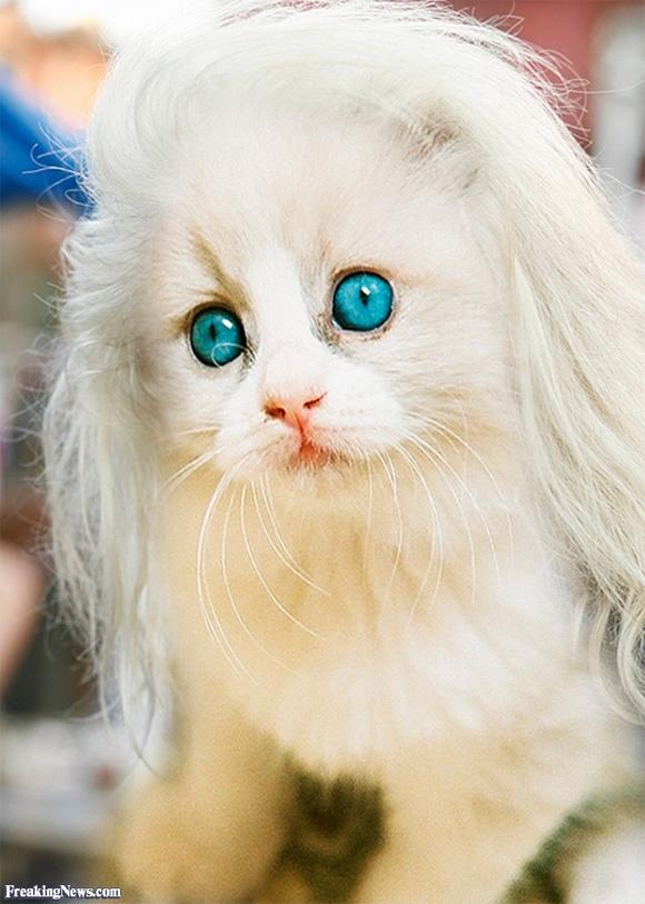 những hình ảnh hài hước của loài mèo p5 0
