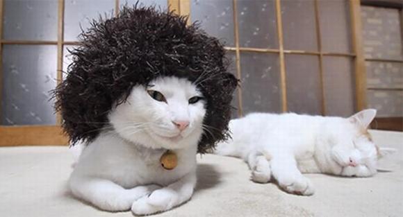 những hình ảnh hài hước của loài mèo p5 18