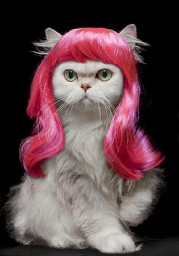 những hình ảnh hài hước của loài mèo p5 17