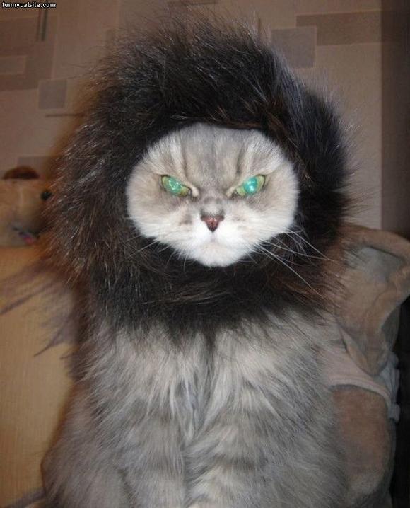 những hình ảnh hài hước của loài mèo p5 14