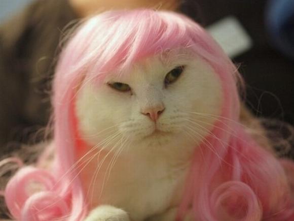 những hình ảnh hài hước của loài mèo p5 13
