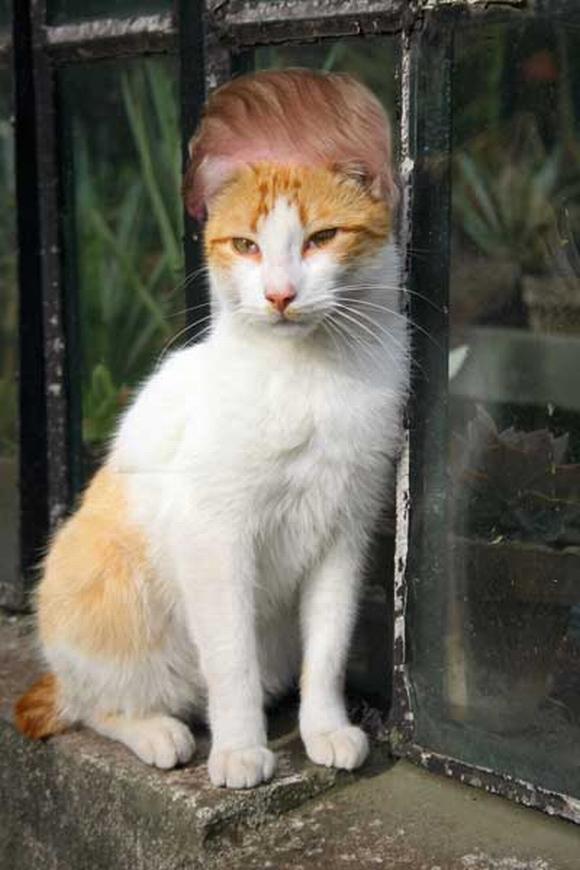 những hình ảnh hài hước của loài mèo p5 12
