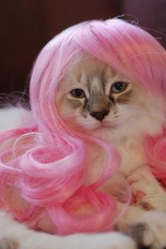 những hình ảnh hài hước của loài mèo p5 21