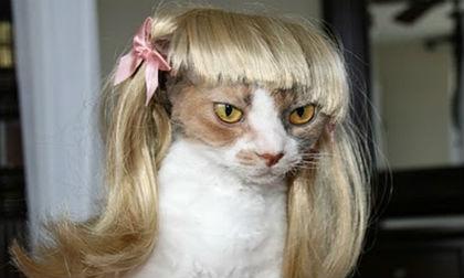 'Chết cười' với những hình ảnh hài hước của loài mèo (P5)