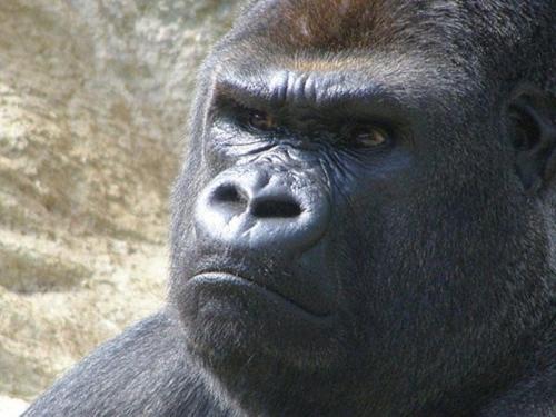Chết cười với bộ mặt cau có cực hài hước của động vật 3