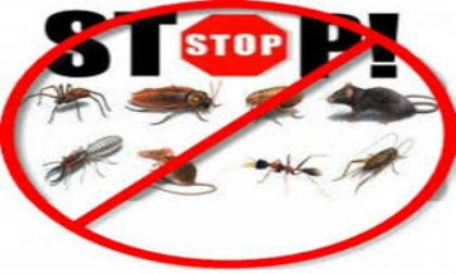 diệt ruồi, ruồi, cách diệt ruồi