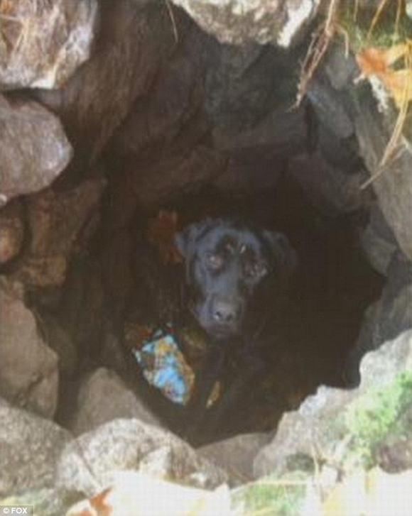 sống sót kỳ diệu, sống sót kỳ diệu sau 2 tháng mất tích, sống sót kỳ diệu dưới hố sâu, sống sót, chú chó sống sót kỳ diệu, tin, bao