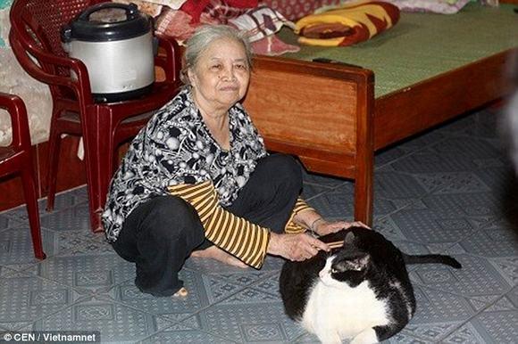 chú mèo lớn nhất thế giới, chú mèo, chú mèo lớn nhất thế giới khiến báo Anh kinh ngạc, chú mèo béo nhất thế giới, mèo, chú mèo lớn nhất thế giới ở Việt Nam, tin, bao