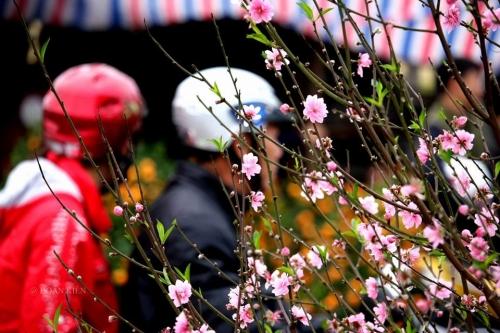 Tết nguyên đán, Chợ hoa ngày tết, Tết Bính Thân 2016