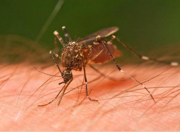 7 người dễ bị muỗi chích, cách tránh muỗi, người dễ bị muỗi đốt