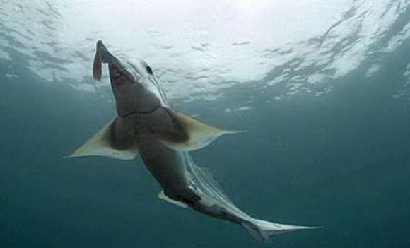 sinh vật biển có hình thù kỳ dị, sinh vật biển có hình thù quái dị, sinh vật biển khổng lồ,  thủy quái đại dương, kỳ quặc