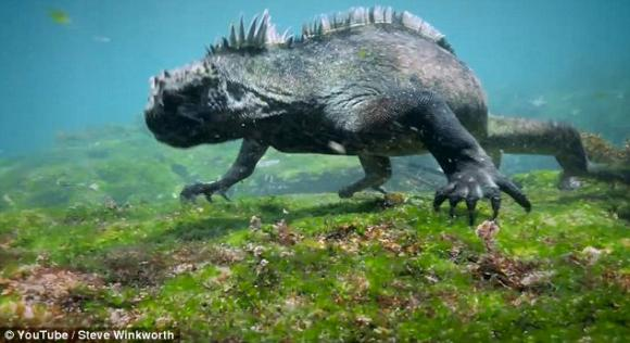 quái vật biển, quái vật biển kinh dị, sinh vật thời tiền sử, phát hiện quái vật, sinh vật biến dị, động vật đột biến