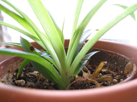 8 loại cây trồng trong nhà 6