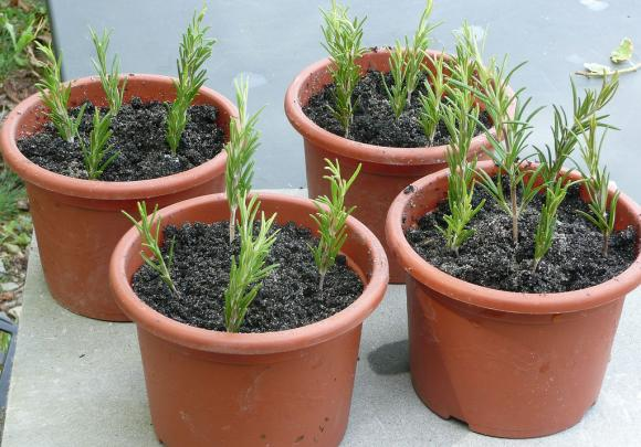 8 loại cây trồng trong nhà 4