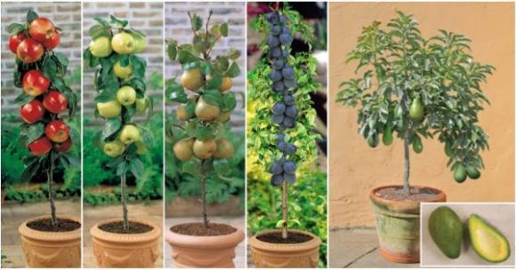 cay canh an qua 9 ngoisao.vn Điểm qua xu hướng trồng cây cảnh lùn ăn quả 100% người đều mê