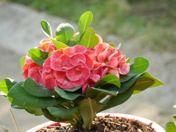 Những loại hoa mang may mắn đến nhà mà gia chủ nên trồng 2