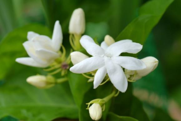 Những loại hoa mang may mắn đến nhà mà gia chủ nên trồng 0