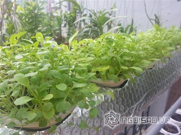 Vườn rau nhà sao Việt 2