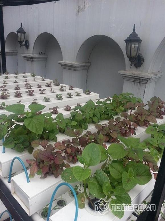 Vườn rau nhà sao Việt 1