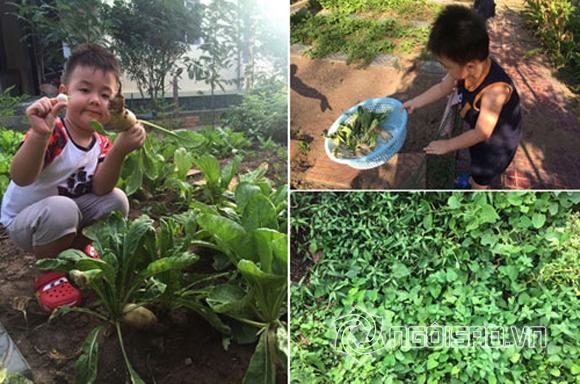 Vườn rau nhà sao Việt 4