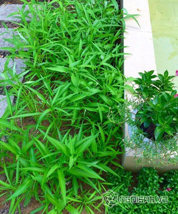 Vườn rau nhà sao Việt 3